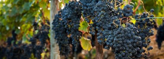 vinosespana_35b68257528bd504f58d55859e6f708e